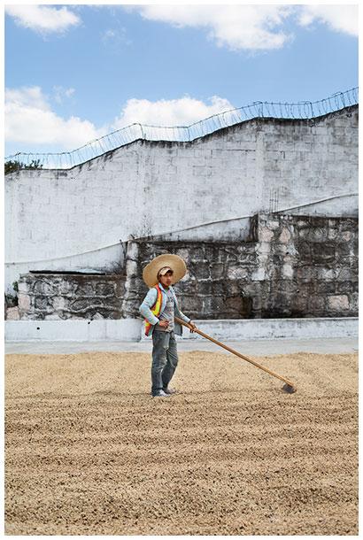 Male worker on a coffee farm in Honduras