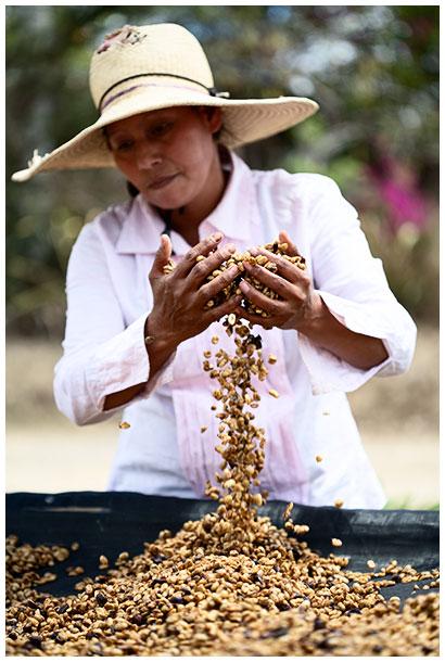 Female worker on a coffee farm in Honduras