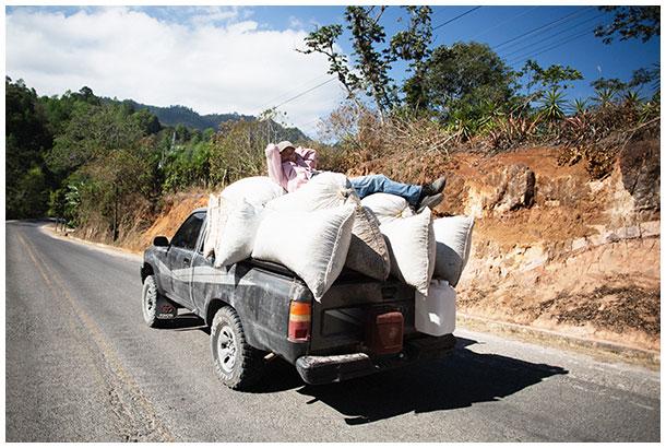 Honduran coffee farmer lying on coffee bags on a pickup car