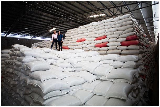 Coffee beans in a warehouse in Honduras